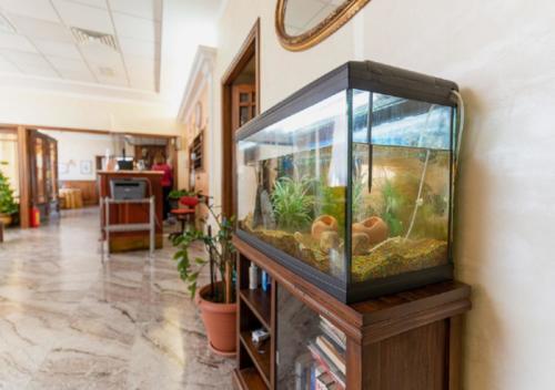 Hotel Villa delle Rose - Hole